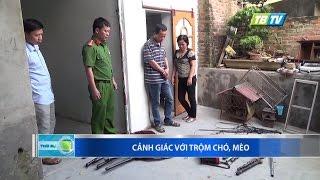 CẢNH GIÁC VỚI TRỘM CHÓ MÈO - Thái Bình TV