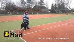 Hundeschule Marl - Junghundeerziehung I - Unterordnungsübungen