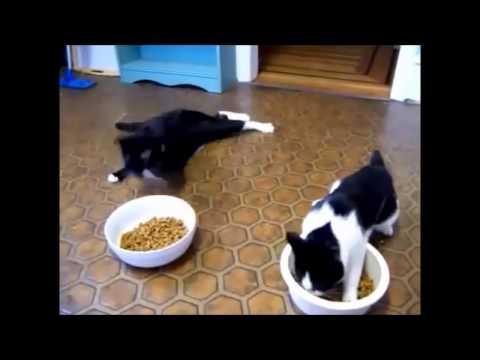 Katzenjammer