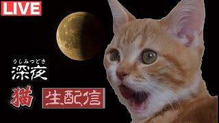 短足マンチカンのちゃたが深夜に何かを感じたのでその深夜に猫と共にライブ配信してみました。 何か起きるかな⁉︎ ライブでクローゼットも...