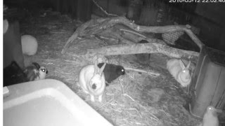 Our Rabbitry Live Stream with night vision camera in the rain.