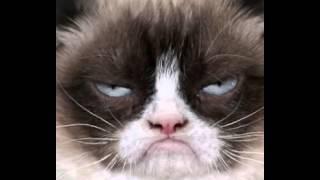 Grumpy Cat Had Fun Once