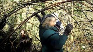 Making A Living Willow Arbour