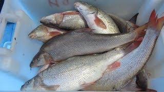 Лучшая рыбалка в Болгарии - на реке Дунай в городе  Тутракан(Достопримечательность Болгарии - город Тутракан на Дунае. Это отличное место для рыбалки и отдыха. Читайте..., 2013-10-01T14:13:43.000Z)