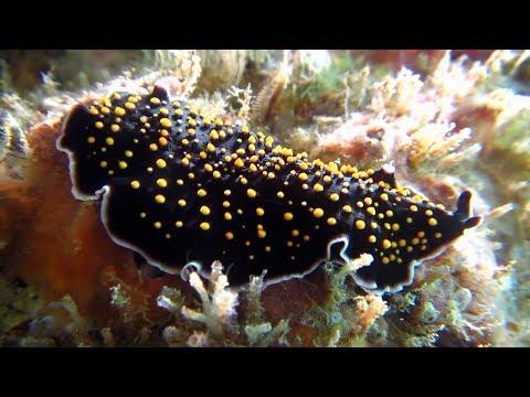 Sea Slugs? Flat Worms! IX.