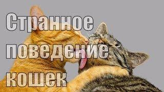 Странное поведение кошек