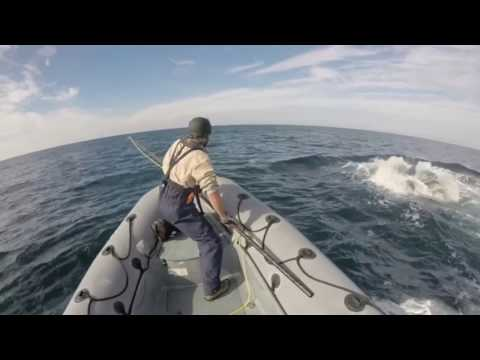 Right Whale Disentanglement - Part 2