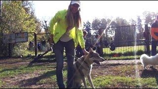 Лучшее видео с собаками
