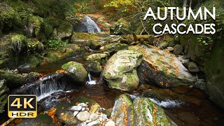 4K HDR Autumn Cascades - Forest Stream - Water Flowing Sounds - Natural White Noise - Sleep / Relax