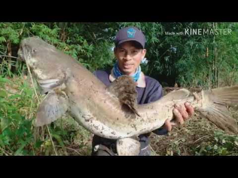 EP.28 ตกปลากด ตามหาจนเจอ กดคังยักษ์ สาละวิน