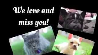 In memory of Toshi, Rylie, and Lynx