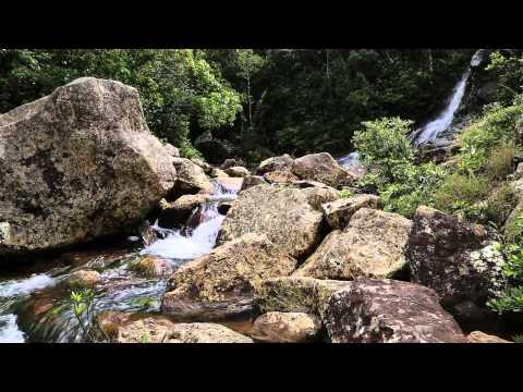 Cascade, Torrent, Chute d'eau | Musique Zen & Relaxante | Relax'Tv