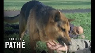 Dog Frees Kidnapped Owner