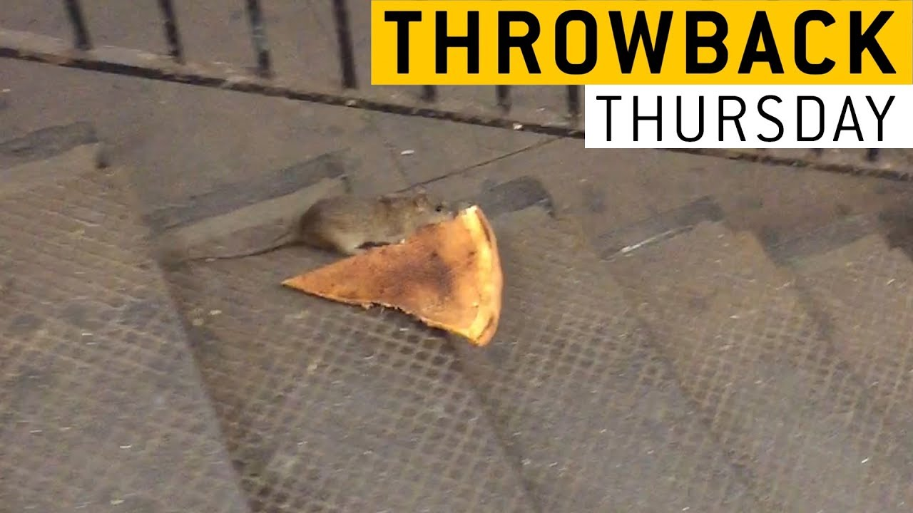 Pizza Rat || JukinVideo Throwback Thursday