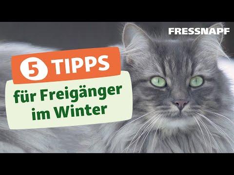 Top 5 Tipps zum Freigang für Katzen in der kalten Jahreszeit