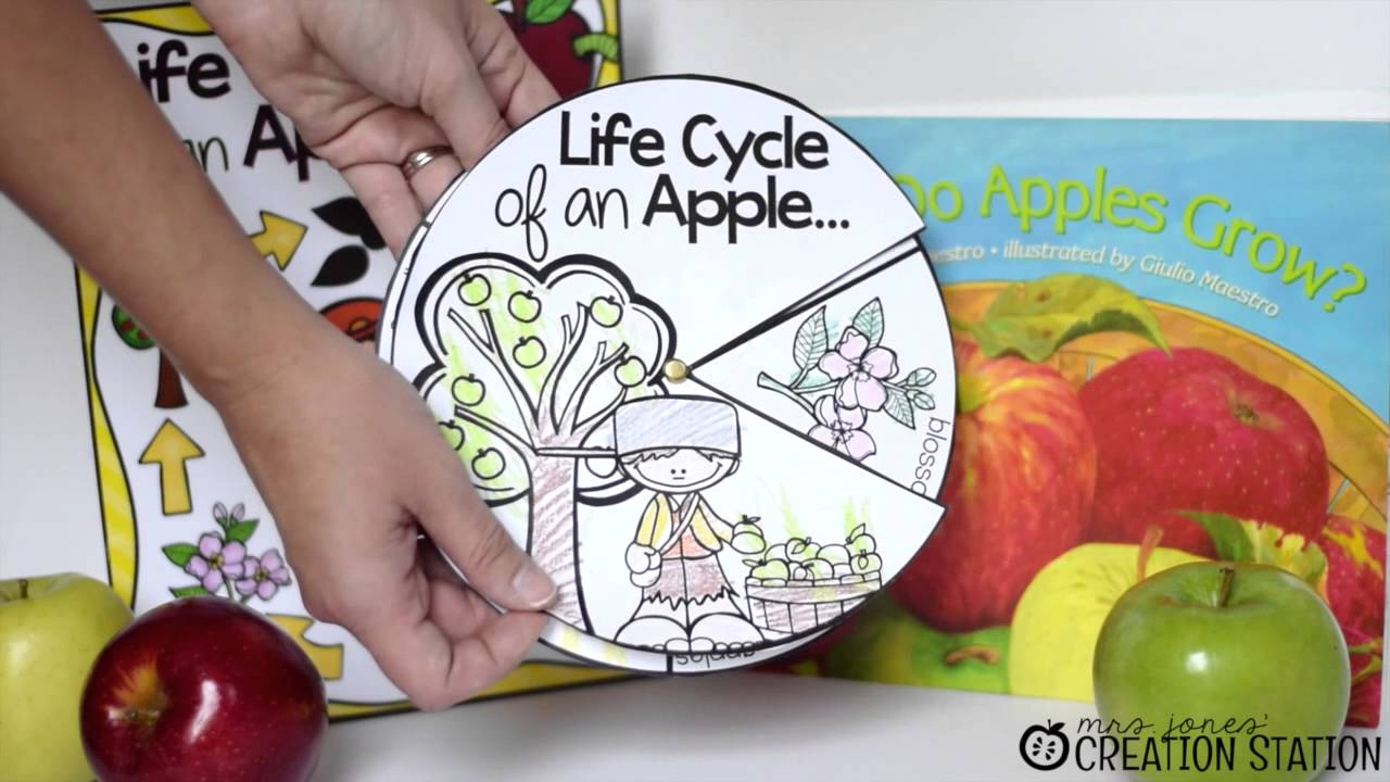 picture about Apple Life Cycle Printable called Everyday living Cycle of An Apple
