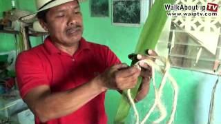 Making the REAL Panama Hats