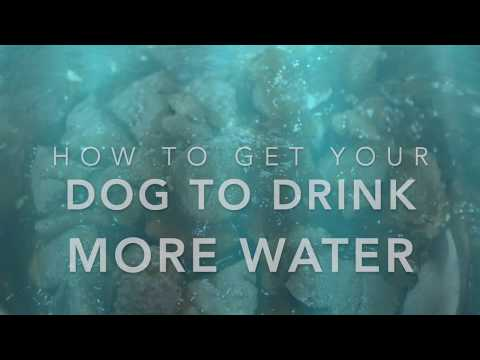 How To Get Your Dog To Drink More Water