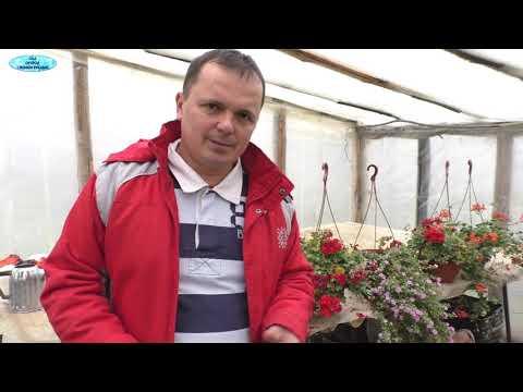 Как избавиться от белокрылки в огороде
