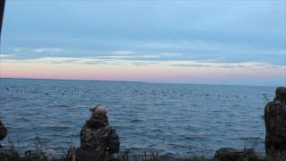 Gulf of Mexico duck hunting 2016-17
