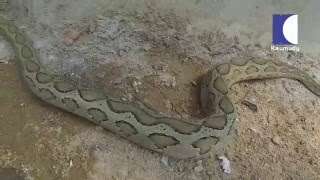 Snake Master EP-125 Vava Suresh vs Viper