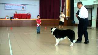 Skc Dog Obedience Trial - Isaac In Intermediate Class