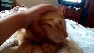 Прикол кот который будто чихает