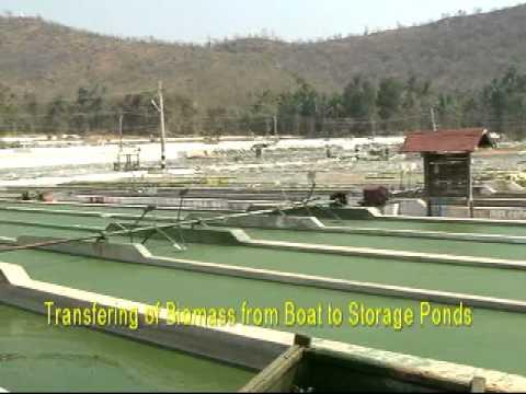 Algae Production from Spirulina Lakes in Myanmar