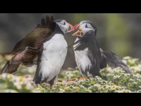 Carlos Perez Naval - Young Wildlife Photographer of the Year 2014 | Natural History Museum
