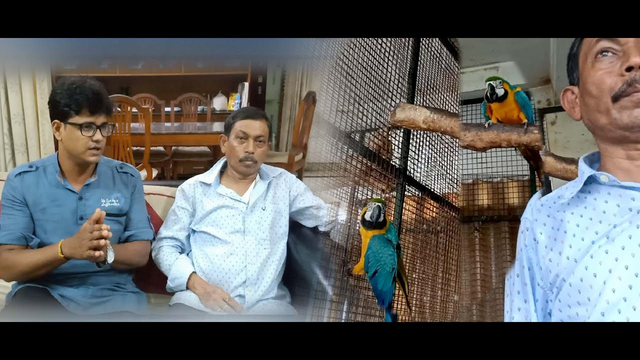 Macaw, Gray, Parrot birds feeding, care & breeding tips discuss with Babu da (Kolkata Lovebirds)
