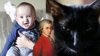 Bebê, Gato e Mozart  - Baby, Cat and Mozart