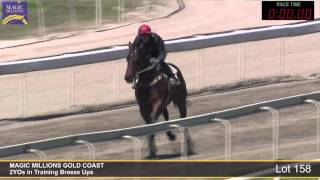 Lot 158 - 2YOs in Training Breezeup Thumbnail