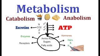 Concept of Metabolism  (Catabolism and anabolism)
