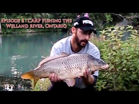 Episode 2 : CARP fishing the Welland river, Ontario