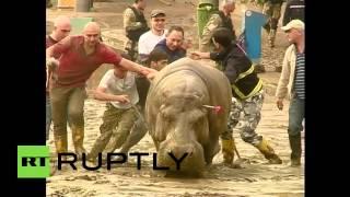 В Тбилиси продолжается отлов сбежавших из зоопарка животных