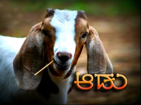 Goat Farming (Kannada)