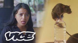 Download lagu Cap Tikus: Alkohol Kebanggaan Sulawesi Utara