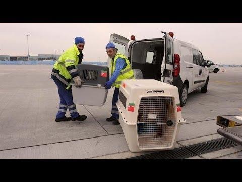Frankfurt Airport Reportage - Tiere am Flughafen