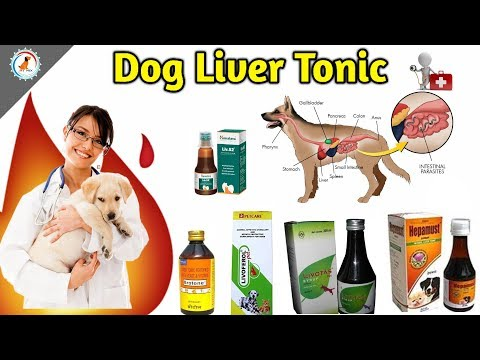 Dog best liver tonic / liver tonic information / When to give? / Best Brands