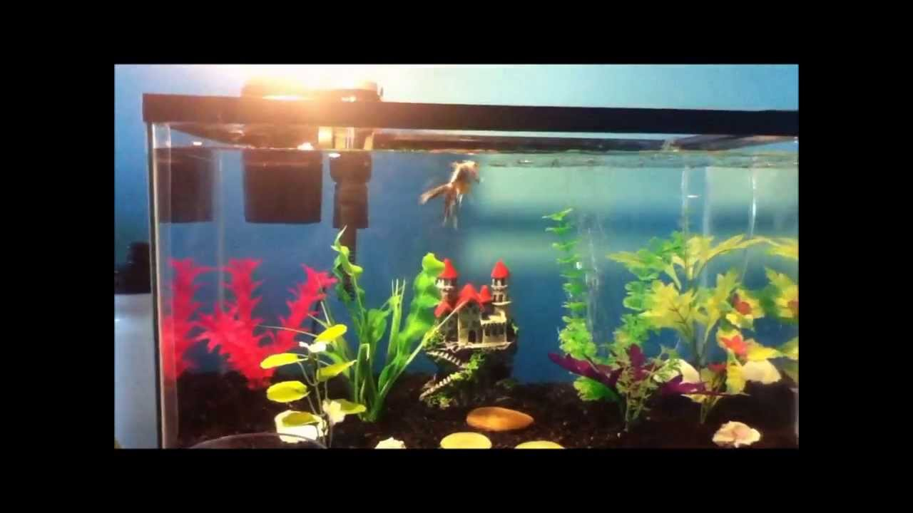 How to set up a goldfish aquarium youtube for Fish tank for goldfish