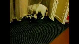 Котята в дар.mp4