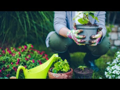 7 Amazing Benefits Of Gardening That Good Your Health