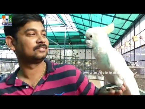 TALKING BIRD | BIRD PARK | SHIRDI | INDIA