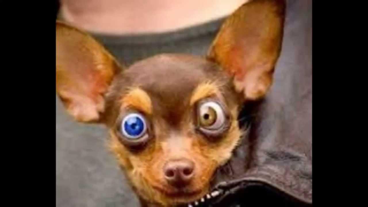 Grappige Honden En Katten Filmpje Youtube