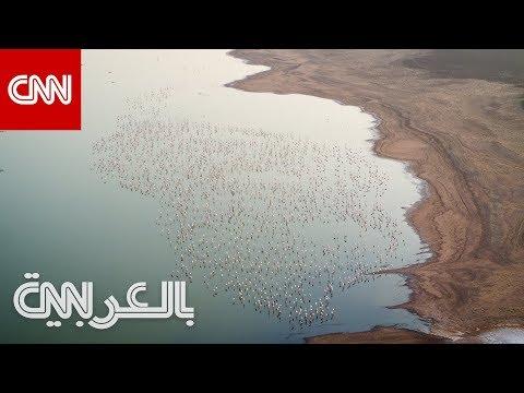 محمية الوثبة للأراضي الرطبة.. واحة أبو ظبي غير المتوقعة  - نشر قبل 2 ساعة