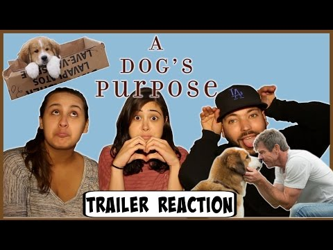 A dog's purpose Official Trailer | Trailer Reaction