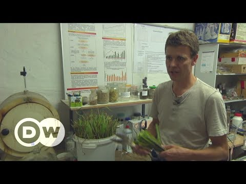 Mining rare metals with super grass | DW English