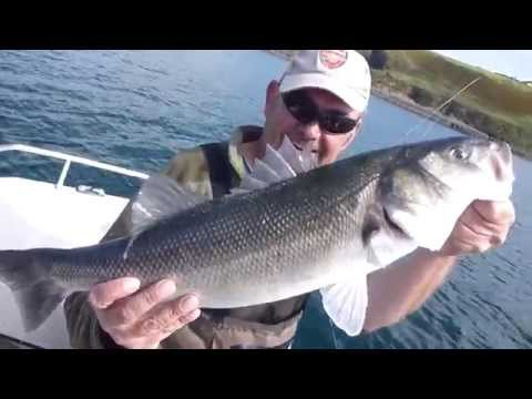 Clonakilty Bass Angling Guide. Eight pound bass on a surface lure.