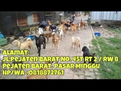 Seribu Anjing Menunggu Adopsi Anda, Dahsyat Pejaten Shelter, bener-bener dog lover sejati