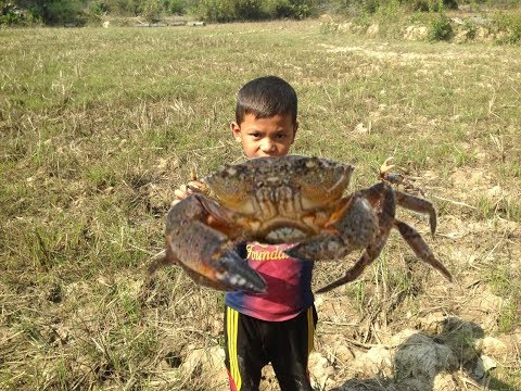 AMAZING Man  catching crab in field